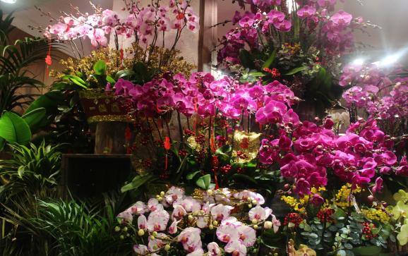 Flower Market Road 가는 길에 있는  Fa Yan Street (花園街) . 평일인데도 불구하고  춘절 (春節, Chinese New year) 이 얼마 남지 않아서 꽃을 장만 하러 온 사람들로 가득했다. 곧 다가오는 춘절을 맞이하는 듯 홍색의 화려한 장식을 한 화분들이 보이고 역시나ㅡ재물운을 불러온다 하여 구정 때 많이 볼 수 있는 나무에 열린 금귤들도 보인다.