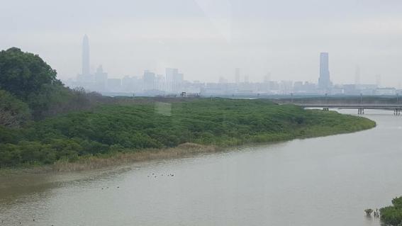 멀리 광동 성(廣東省) 심천(深圳)의 고층빌딩들이 보인다. 습지공원 일대는 심천과 홍콩의 하천 국경선인 심천강(深圳河) 하구이다. 빌딩 숲이 강변까지 빽빽히 우거져 있는, 난개발의 전형을 보여주는 중국 쪽은 답답해 보이고 숨이 턱 막히는 느낌인 반면 습지와 삼림이 잘 보존되어 있고 시야가 탁 트인 홍콩 쪽은 시원해 보이고 쾌적한 느낌을 준다.