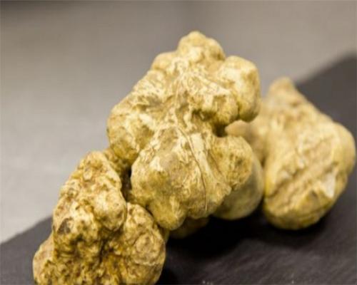 송로버섯 (white truffles)