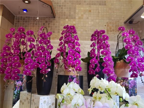 △양난 (Orchids): 비옥함, 풍요, 세련미, 고급스러움을 나타내고 있어 2019년도의 번영을 바라는 마음이 담겨있다.