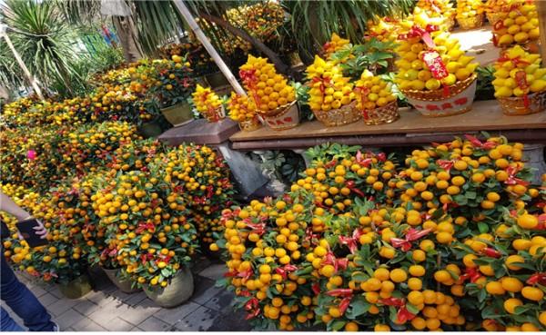 △포 멜로 스(Po Melos): 행운을 가져다주며 가족 단결의 상징이다. 몽콕 꽃시장이 포 메로스와 감귤로 온통 샛노란 세상이다.